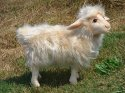 HANSA Mama Sheep White